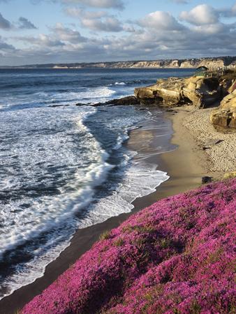 USA, California, La Jolla, Flowers Along the Pacific Coast