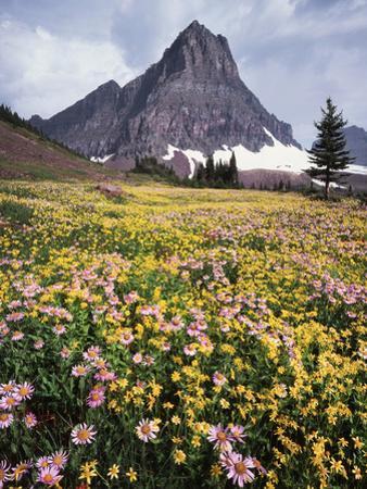 USA, Montana, Glacier National Park, Wildflowers and a Mountain Peak