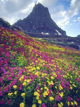 Wildflowers in Summer, Glacier National Park, Montana, USA by Christopher Talbot Frank