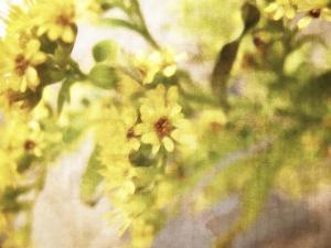 A Sensitive Sort of Beauty by Christy Ann