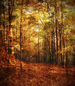 Autumn's Enchanted Forest by Christy Ann