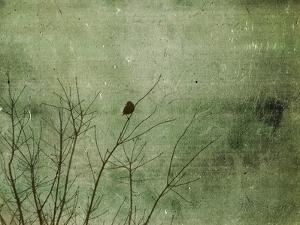 Blackbird by Christy Ann
