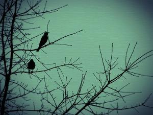 Freedom by Christy Ann