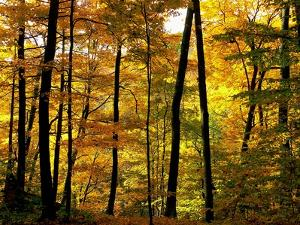 Fall Colors by Chuck Burdick