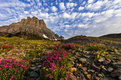 Alpine Wildflowers in the Hanging Gardens of Logan Pass in Glacier National Park, Montana, Usa