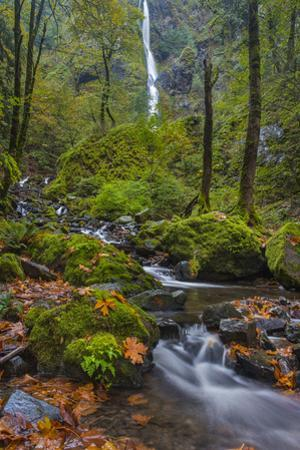 Autumn Color Along Starvation Creek Falls, Columbia Gorge, Oregon by Chuck Haney