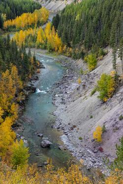 Autumn color along the Middle Fork of the Flathead River in Glacier National Park, Montana, USA by Chuck Haney