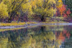 Autumn Colors Reflect into the Whitefish River in Whitefish, Montana, Usa by Chuck Haney
