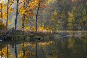 Backlit Trees on Lake Ogle in Autumn in Brown County Sp, Indiana by Chuck Haney
