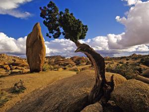 Balanced Rock and Juniper, Joshua Tree National Park, California, USA by Chuck Haney