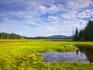Bass Harbor Marsh in Acadia National Park, Maine, USA by Chuck Haney