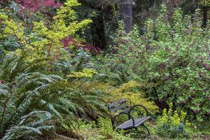 Bench with spring bloom at the Arboretum in Seattle, Washington State, USA by Chuck Haney