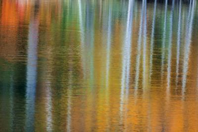 Birch trees artistically reflect into small lake with autumn color, Marquette, Michigan USA by Chuck Haney