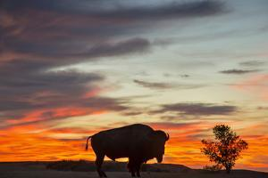 Bison Bull Silhouette, Theodore Roosevelt NP, North Dakota, USA by Chuck Haney