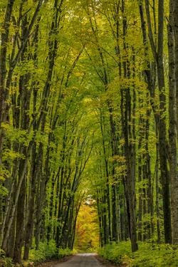 Covered road near Houghton in the Upper Peninsula of Michigan, USA by Chuck Haney