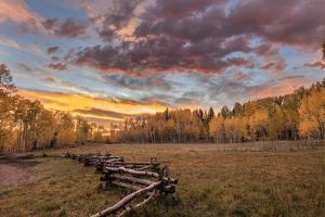 Dramatic Sunset Light on Aspen Grove at Owl Creek Pass in the Uncompahgre National Forest, Colorado by Chuck Haney
