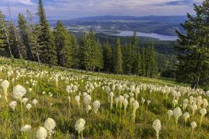 Epic beargrass bloom on Big Mountain in Whitefish, Montana, USA by Chuck Haney