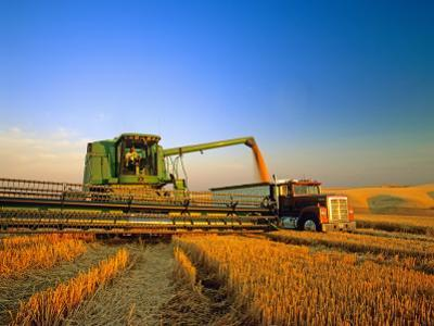 Farmer Unloading Wheat from Combine Near Colfax, Washington, USA