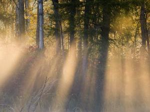 Foggy Sunrise at Tamarac National Wildlife Refuge, near Detroit Lakes, Minnesota, USA by Chuck Haney