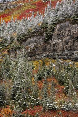 Fresh snowfall on autumn colors in Glacier National Park, Montana, USA by Chuck Haney