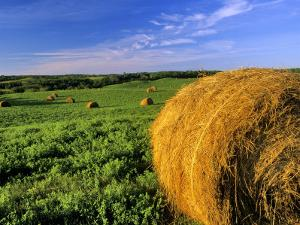 Hay Bales near Bottineau, North Dakota, USA by Chuck Haney
