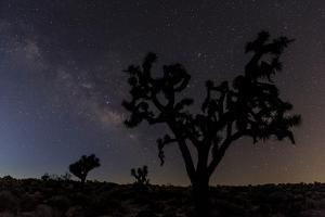 Joshua Trees Silhouetted by Starry Skies in Joshua Tree NP, California by Chuck Haney