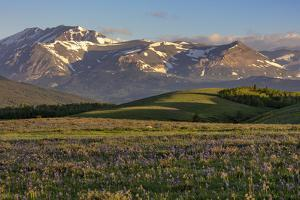 Larkspur and other prairie wildflowers along the Rocky Mountain Front near East Glacier, Montana. by Chuck Haney
