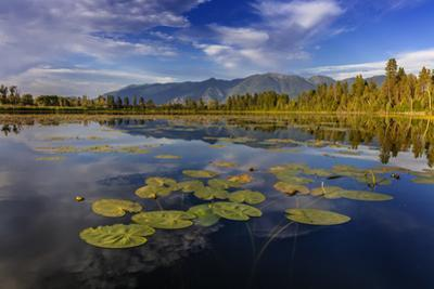 Lilly pads and Swan Range reflects into McWennger Slough, Kalispell, Montana, USA by Chuck Haney