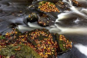 Little Carp River in Porcupine Mountains Wilderness SP in the Upper Peninsula of Michigan, USA by Chuck Haney