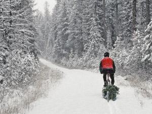 Mountain Biker Bringing Home the Family Christmas Tree, Whitefish, Montana, USA by Chuck Haney
