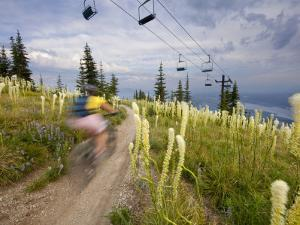 Mountain Biker Through the Beargrass on the Summit Trail, Whitefish Mountain Resort, Montana, USA by Chuck Haney