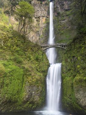 Multnomah Falls, Columbia Gorge National Scenic Area, Oregon, USA by Chuck Haney