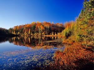 Pond in the Chaquamegon National Forest, Cable, Wisconsin, USA by Chuck Haney