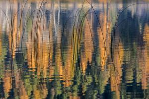 Reeds Catch Morning Light with Autumn Reflections , the Kootenai National Forest, Montana by Chuck Haney