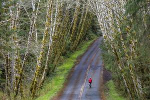 Road bicycling on the Hoh Road in Olympic National Forest, Washington State, USA (MR) by Chuck Haney