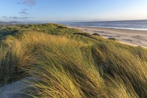 Sand Dunes and Pacific Ocean in the Oregon Dunes NRA, Oregon by Chuck Haney