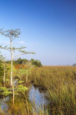 Sawgrass Highlighted in Light, Everglades National Park, Florida, USA by Chuck Haney