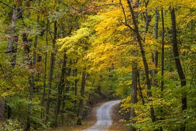 Scenic Road Through Autumn Forest Indiana, USA