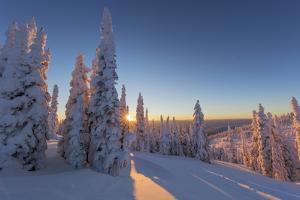Setting sun through forest of snow ghosts at Whitefish, Montana, USA by Chuck Haney