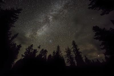 Sky full of stars in the forest in Glacier National Park, Montana, USA by Chuck Haney