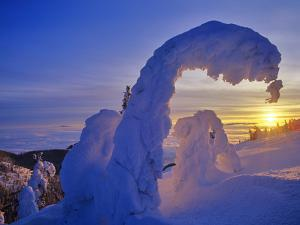 Snow ghosts at sunset on Big Mountain in the Whitefish Range in Whitefish, Montana, USA by Chuck Haney