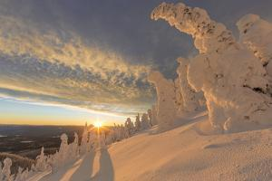 Snow ghosts in the Whitefish Range near Whitefish, Montana, USA. by Chuck Haney