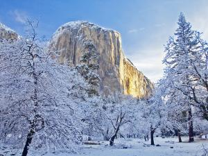 Sunrise Light Hits El Capitan Through Snowy Trees in Yosemite National Park, California, USA by Chuck Haney