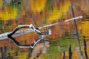 Tree limb and colorful autumn reflection on Lost Lake in Glacier National Park, Montana, USA by Chuck Haney