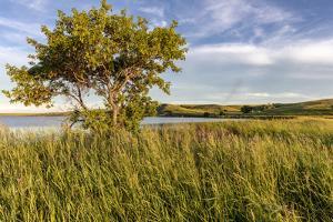 Wildflowers along Medicine Lake in Medicine Lake National Wildlife Refuge, Montana, USA by Chuck Haney