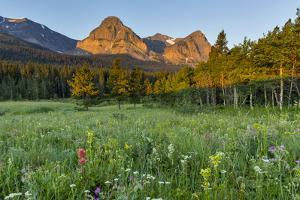 Wildflowers in the Cut Bank Valley of Glacier National Park, Montana, USA by Chuck Haney