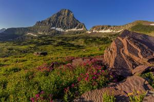 Wildflowers with Mount Reynolds, Logan Pass, Glacier National Park, Montana, USA by Chuck Haney