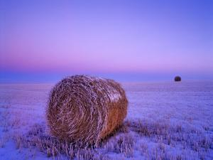 Winter Straw Bales near Cartwright, North Dakota, USA by Chuck Haney