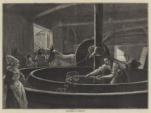 Cider-Making in Normandy