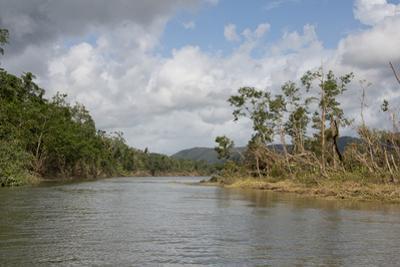 Australia, Daintree National Park, Daintree River. Rainforest by Cindy Miller Hopkins
